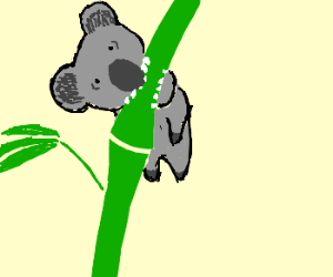 Koala on a bamboo branch