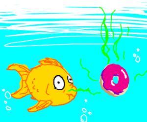 Fish encounters stinky donut