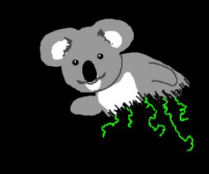 Happy Koala has parasites
