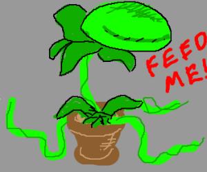 FEED ME, SEYMOUR, FEED ME
