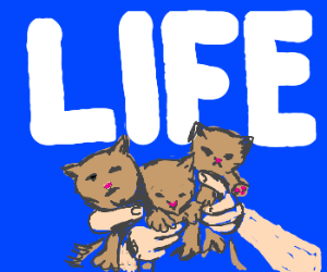 When life gives you cats