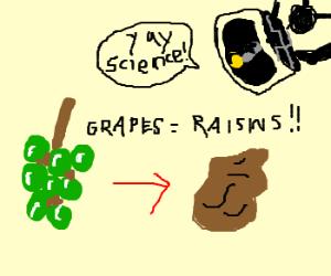 Grapes Turn into Raisins. SCIENCE!