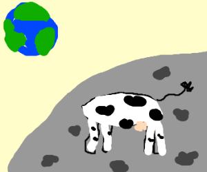 Headless cow on the moon