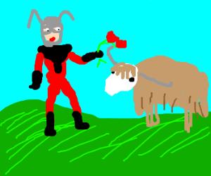 Ant-Man loves the Yak!