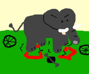 elephant unsuccessfully riding bike