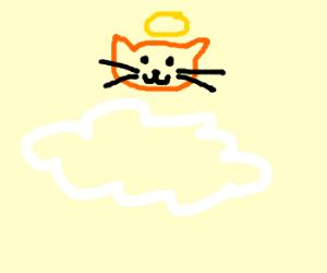 holy cat in heaven