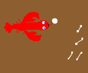 Lobster licks cotton ball