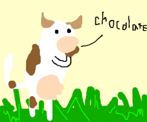 a cow eating chocolate