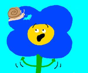 A snail! Flower is horrified!