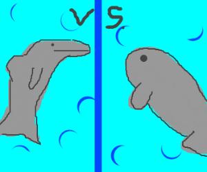 Dolphin Vs. Manatee