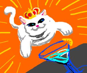 King Cat attacks jello martini