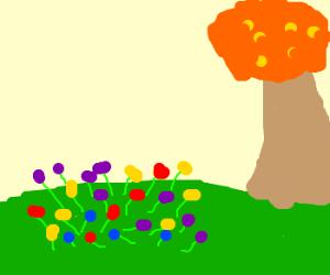 a garden in the fall