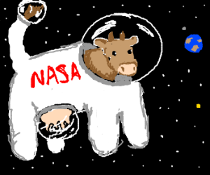 NASA puts a cow in space