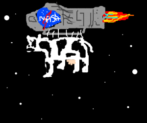 NASA sent cow to space