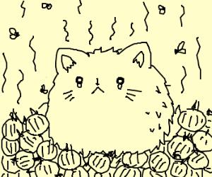 Smelly cat, smelly cat
