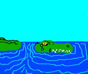 crying gator swims through water