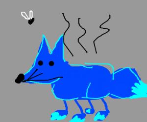 stinking blue fox
