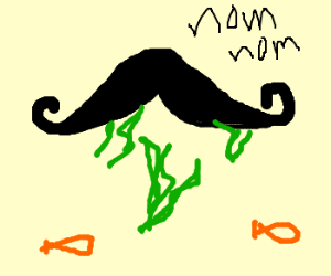 Mustache eats seaweed