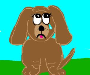 a very sad puppy
