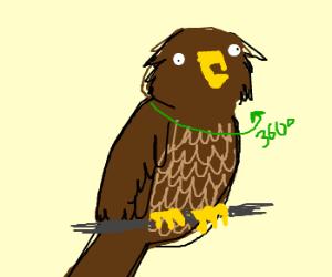 Owls spinning their necks and heads around