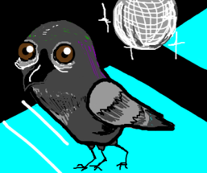 Threelegged disco pidgeon