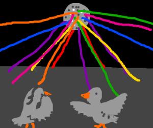 Pigeon Disco