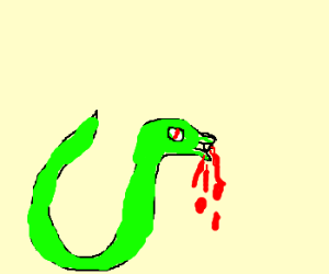 Snake ready to bite