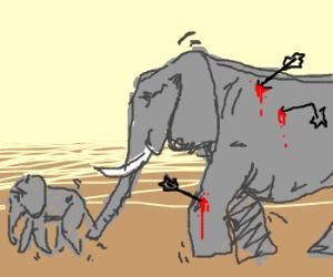 Elephant shot in the knee w/ arrow