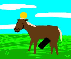 Horses are hard