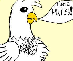 White, frilled bird is not a fan of nuts.