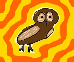 Flashing owl rly.