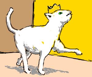 Self-important cat.