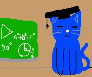 Blue cat is a great teacher