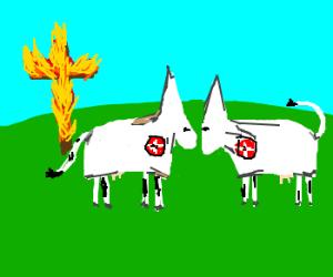 ku klux klan recruit cows now, apparently.....