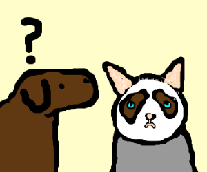 dog confused by grump cat