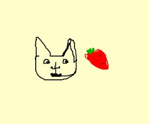 Cat eats Strawberry