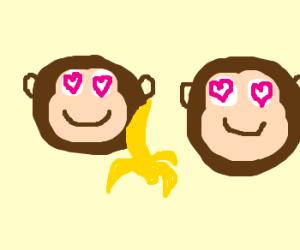 two sweet monkeys in love eating a banana