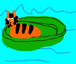 Tiger is lost at sea