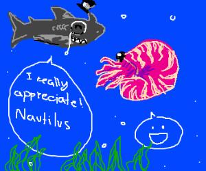 Gentleman shark appreciates nautilus