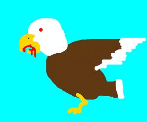 Blood thirsty bald eagle