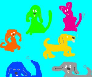 muticolord dogs