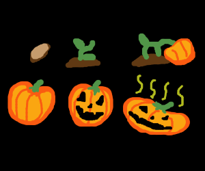 pumpkin through its lifecycle