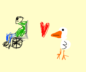 Chicken loves guy in wheelchair