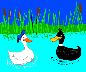 real daffy and donald duck share a pond