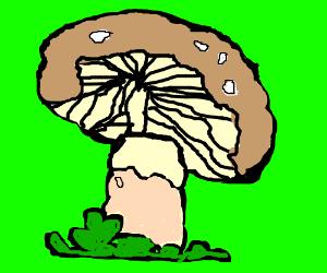 close up on a mushroom