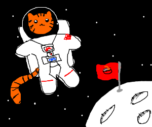 My cat, the astronaut.