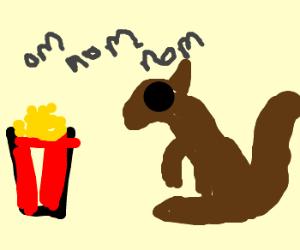 Popcorn eating pensive squirrel
