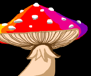 Beautiful but poisonous colorful mushroom