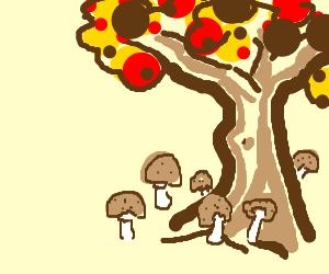 Mushrooms grow under trees this season