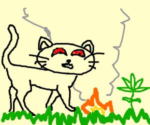 The Innocent Cat Smokes Grass
